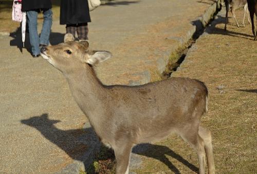 鹿 餌 禁止