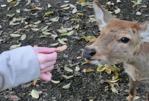 鹿 餌 野菜 どんぐり