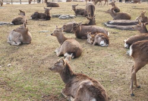鹿 増加 対策