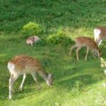鹿による森林の被害とは一体どんなの!?