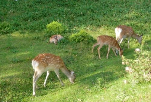 鹿 被害 樹木