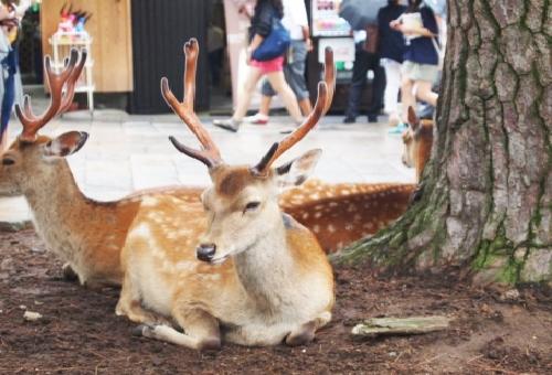 鹿 糞 なぜ
