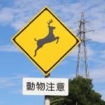 鹿が車に衝突しないための対策方法とは!?