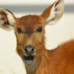 何種類もある!?鹿の鳴き声の種類や鳴く意味とは!?