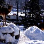 野生の鹿の冬の過ごし方!寒さはどうやって凌いでいるの?