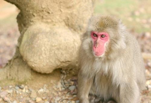 猿 高崎山 歴史 ボス