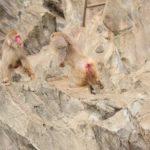 野生の猿に効く撃退方法をご紹介!