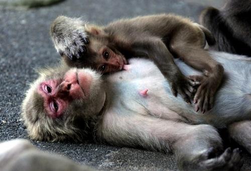 猿 ベンツ 伝説