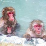 動物園での猿の餌は何を与えているの!?回数は!?
