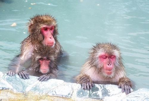 猿 動物園 餌 回数