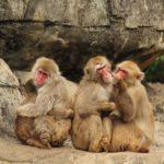 猿の赤ちゃんは首がすわったまま産まれてくるって本当!?