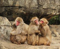 猿 赤ちゃん 首