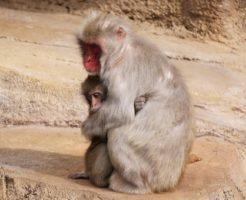 猿 手 足 何本