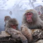 マレーシアに生息する猿の種類は!?