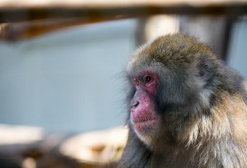 猿 ペット 臭い