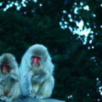 人間と猿の最大の違いとは!?