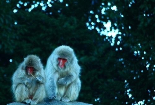 猿 人 違い