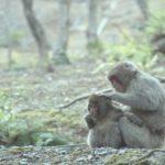 猿とキツネザルとオランウータンの違いは何!?