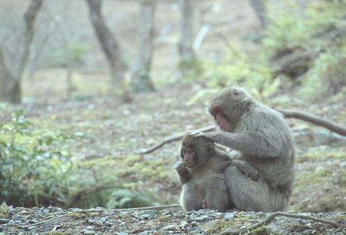 猿 キツネザル オランウータン 違い