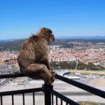 類人猿と猿の違いとは何!?