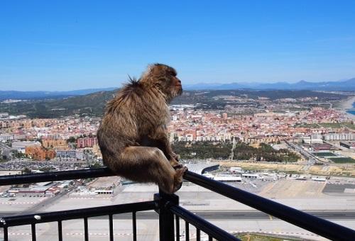 猿 類人猿 違い