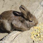 日本の固有種「ニホンノウサギ」ってどんな種類!?