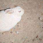 白いうさぎの種類の赤目と黒目の違いは何!?