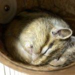 シマリスの巣箱の大きさや設置方法について!