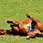 馬が砂遊びをする理由とは!?
