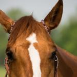 馬は音に敏感!?聴覚はどれくらい!?