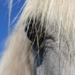 馬の芦毛とはどんな毛の種類!?毛によって性格は違う!?