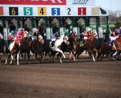 馬 種類 競馬