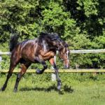 馬の走り方ギャロップとはどんな走り方なの!?