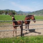 馬を飼う時の土地はどれくらいの広さが必要!?