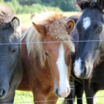 馬の耳の動きで分かる馬の感情とは!?