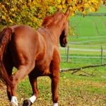 馬の尻尾の長さや毛の特徴とは!?