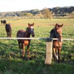 日本に野生の馬は生息しているの!?