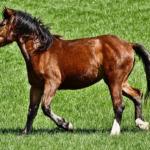 馬の腸は長い!?どれくらいの長さなの!?