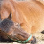 馬の骨折の治療は難しい?治療方法は?