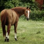 江戸時代の馬のサイズは!?時速どれくらいで走ってたの!?