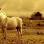 世界一美しい黄金に輝く馬とは!?その特徴は!?