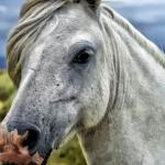 馬にも蕁麻疹がある!原因や治療法とは!?