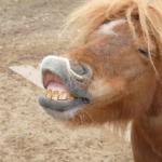 馬の歯の仕組み!伸びるの!?