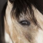 馬は色を認識できるの?識別方法とは!?