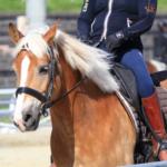 乗馬用として優れている馬の種類とは!?