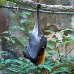 動かないコウモリを発見した場合の対処方法