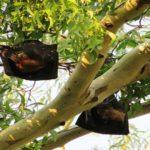 コウモリがエアコンの中にいる時の駆除方法や侵入を防ぐ対策法