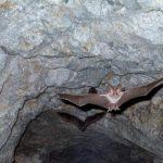 シャッターにコウモリが住み着いた時の駆除対策方法