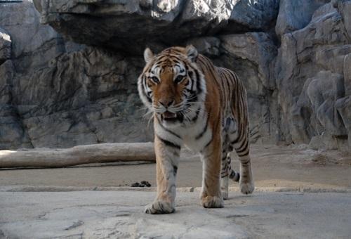 虎 餌 動物園 量