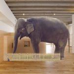 ゾウの足の大きさや特徴について!